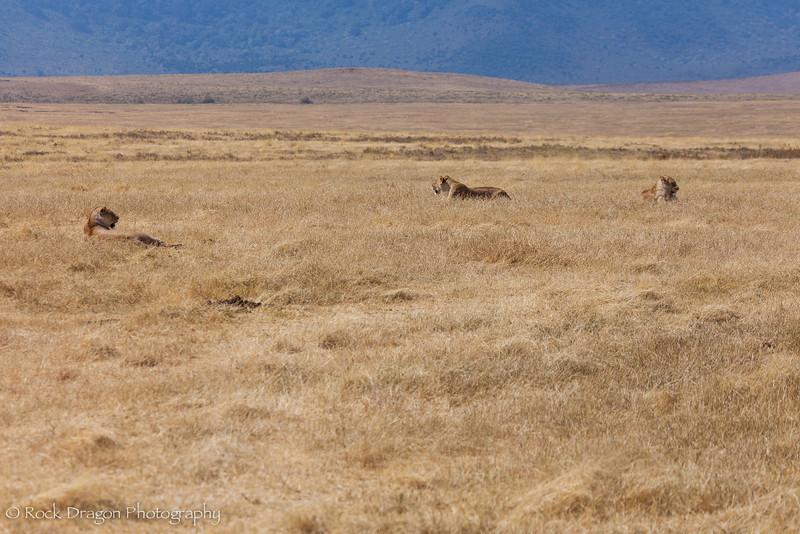 Ngorongoro-36.jpg