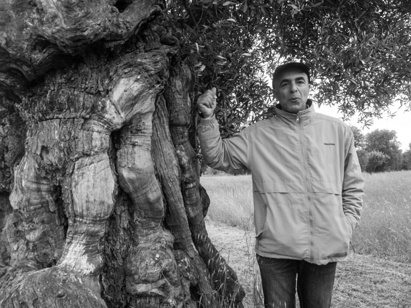 Masseria Brancati explaining old tree.jpg