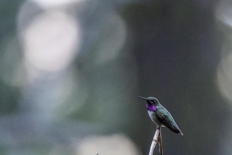 2017 7 10 Humming Birds  SOOC Green_-6.jpg