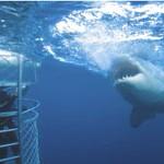 rodney-shark-cage.jpg