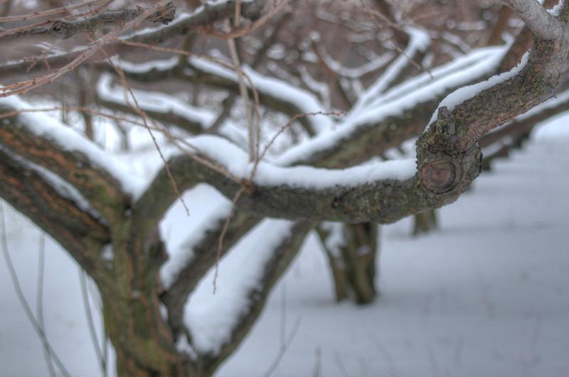 Easy Pickins Winter 009-1676783446-O.jpg