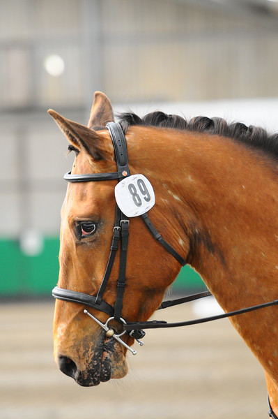 TRRC - Open Dressage Day (Oakhanger - 08-May-16)