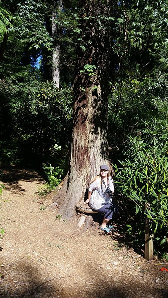 UBC Botanical Gardens and tree walk - aug 2016