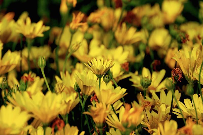 Perky Yellow
