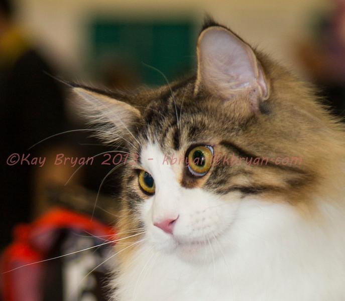 CatShow2014013.JPG