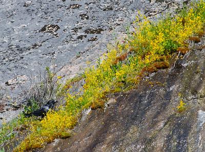 Yellowstone Montana Dakotas 2011