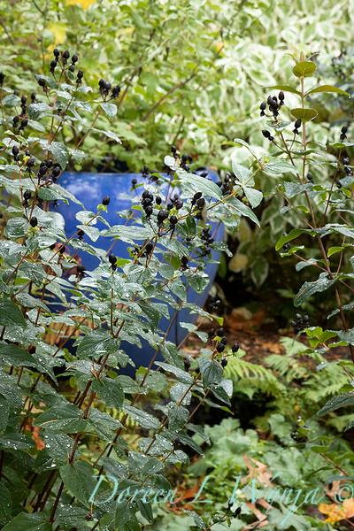 Dietrick fall garden_2066.jpg