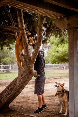 Steve V with Dogs