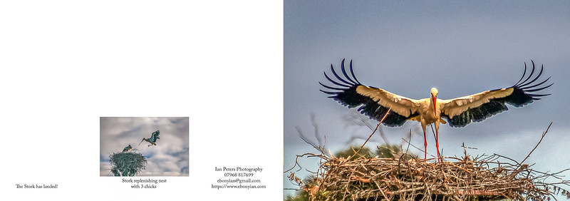 The Stork has landed plus Stork nest replen A5 Template 148mm x 420mm.jpg