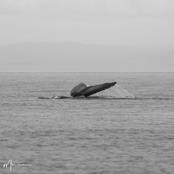2019-08-31 - Whale Watching-0557_edit.jpg