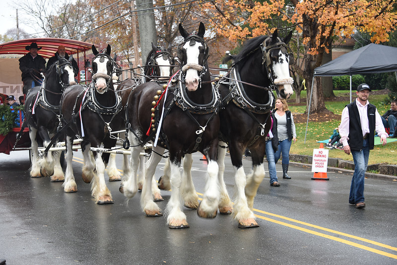 As is tradition, the ever-popular Clydesdale Horse of Hunter Farms led the parade. Davidson Mayor Rusty Knox rode along with his cousins to get this special vantage point for the parade. (Bill Giduz photo)