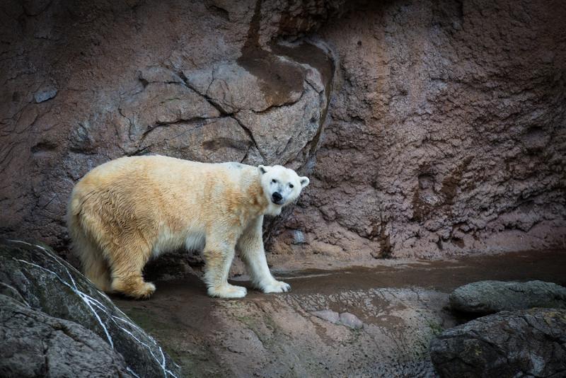Zoo & Dec 31st