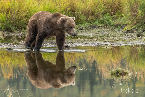 Alaskan Preview