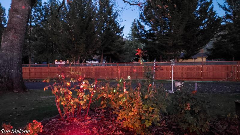 12-01-2020 Christmas Lights Up-19.jpg