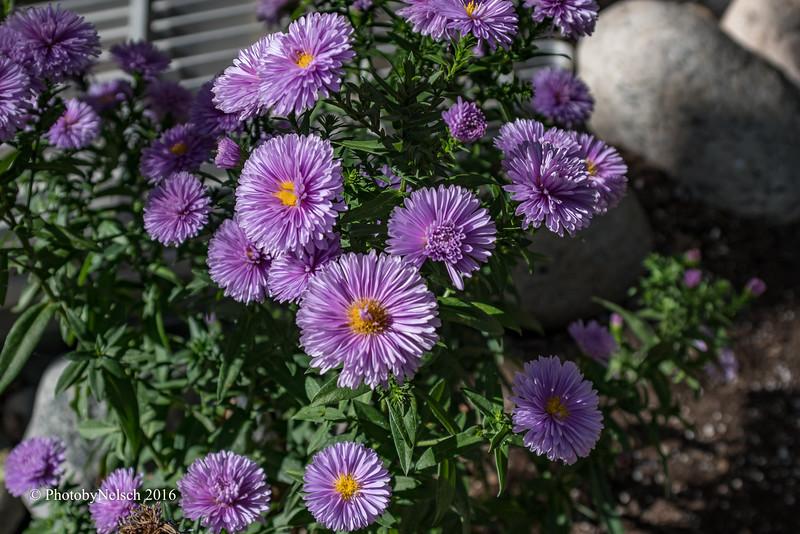 Don Egan's Flowers -118.jpg