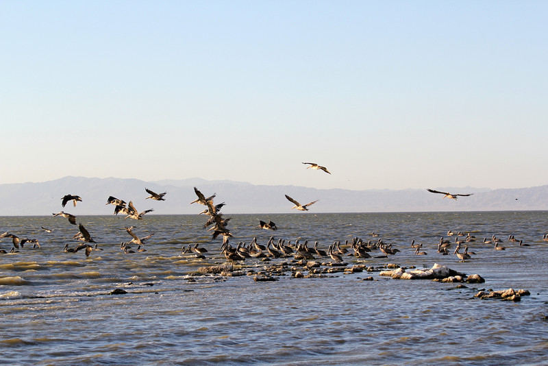 04 The Salton sea (31).JPG