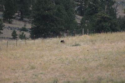 22 14 Bison Range