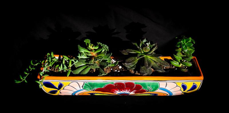 succulents 020220-1337.jpg