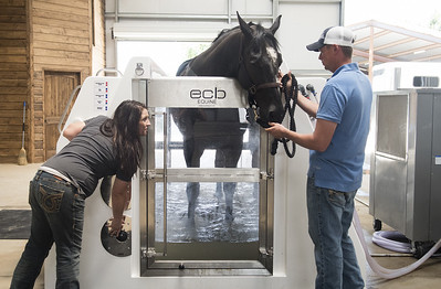 lb-equine-fitness-helps-horses-heal