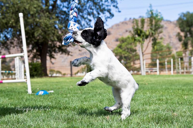 Linda's pup Sassy Cassy