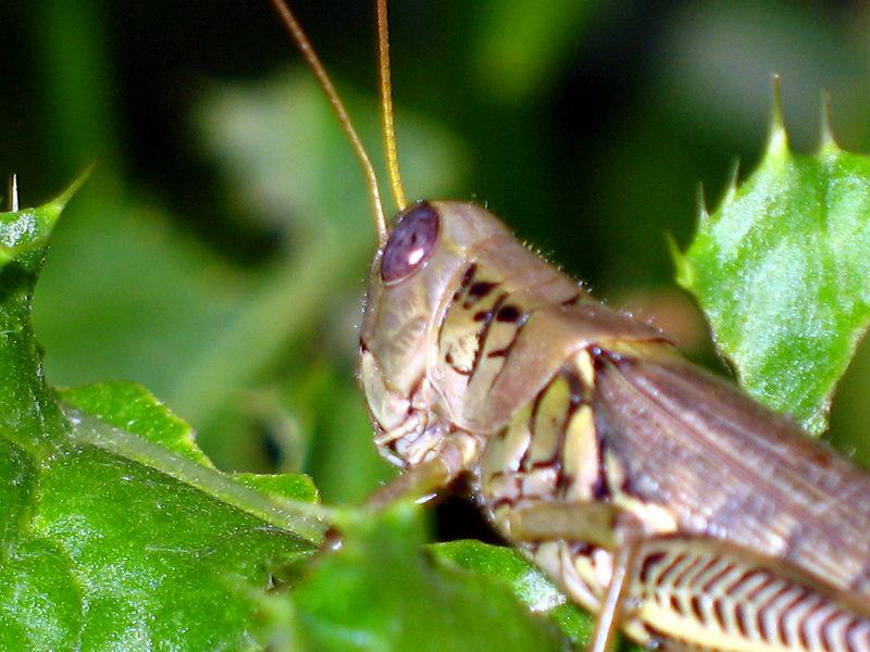 Grasshopper copy.jpg