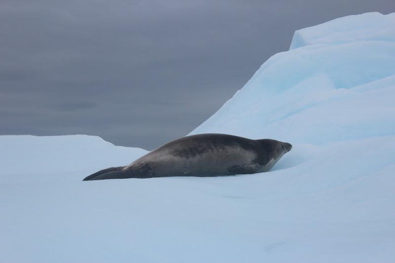 Antarctica 277.JPG