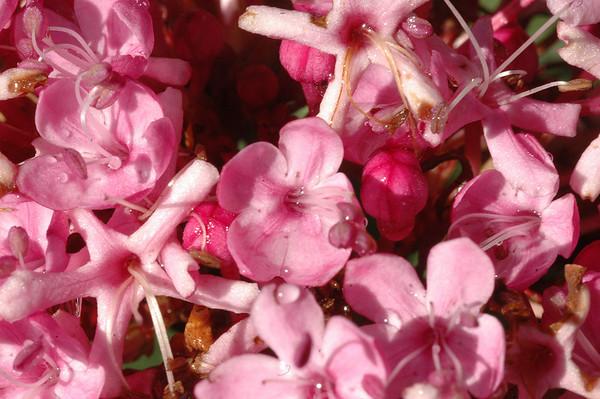 Rare Plants - Baldassare Mineo