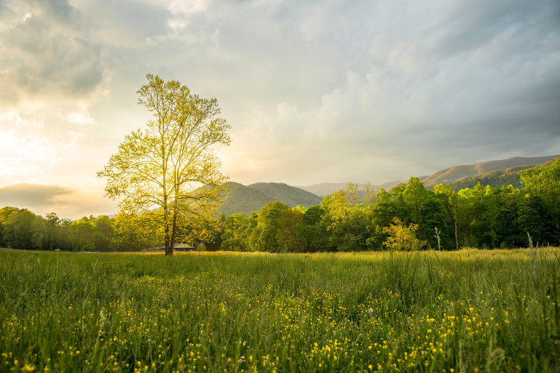 Sunrise in cades cove.jpg