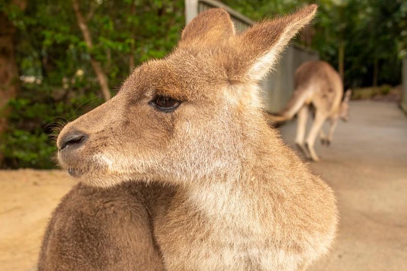 Australia_189.jpg