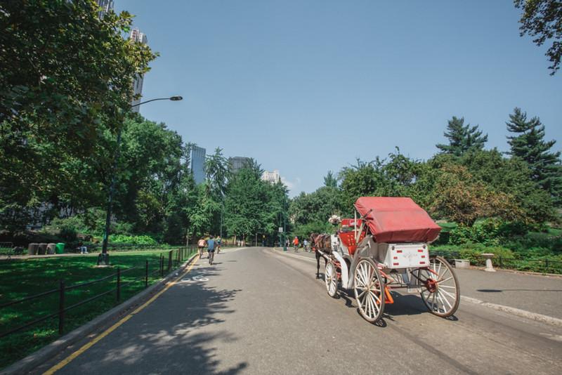 Central Park Elopement - Emma & Kevin-4.jpg