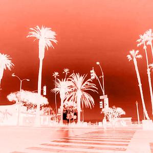 Cyanotype: Digital Negative and Cyanotype