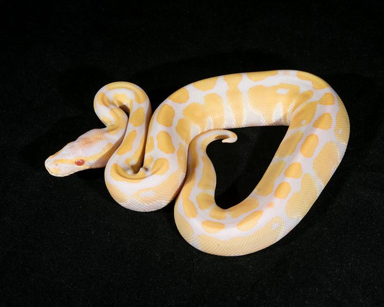 Albino M0514, $175, hold for Josh M.