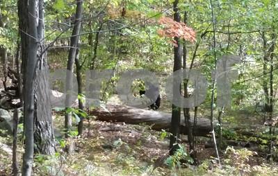 nj-hiker-photographed-bear-before-it-killed-him