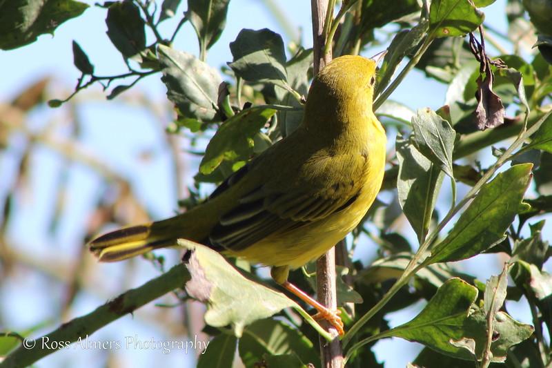 Lowcountry Birds