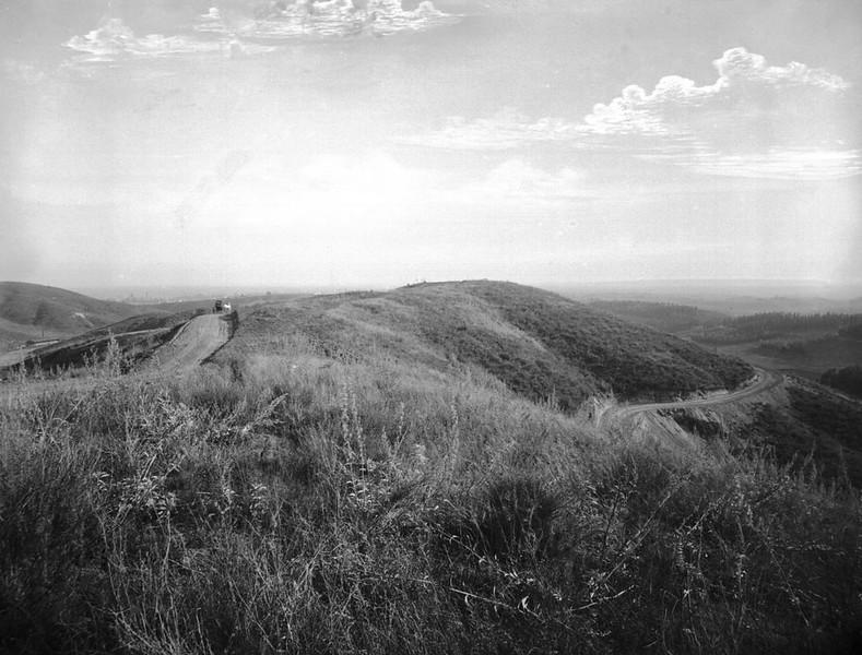 1895, Wild Undergrowth