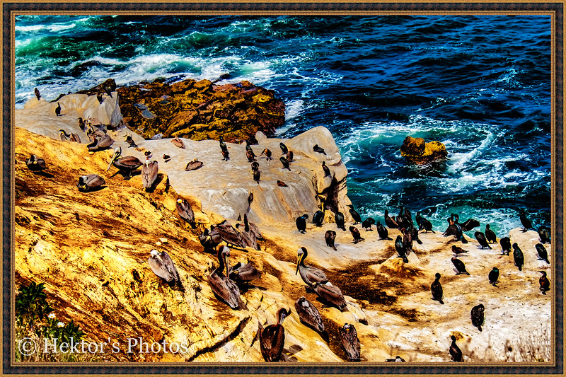 Sand Diego-31.jpg