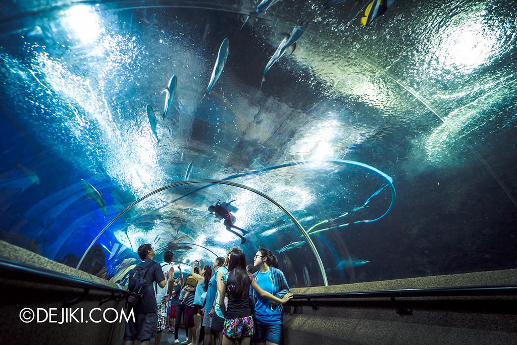 Underwater World Singapore - Tunnel wide drama
