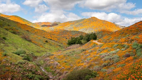 Poppy Fields of Walker Canyon in Lake Elsinore, CA