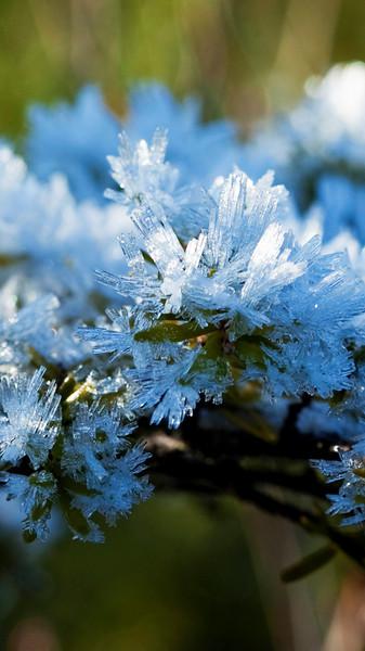 Muskeg Frost