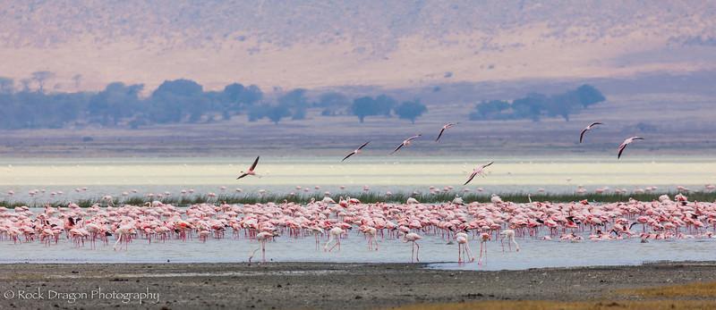 Ngorongoro-77.jpg