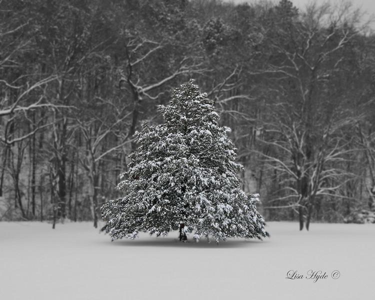 IMG_4970 Spruce Tree signed.jpg