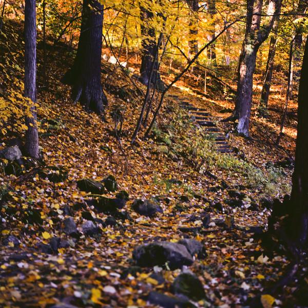 Autumn Hike 120 Film-00017.jpg
