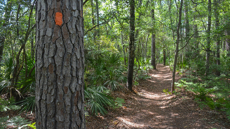Florida Trail White Springs Tract