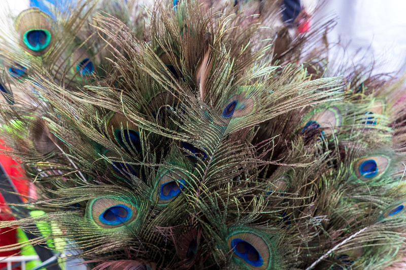 Peacock Feathers Outside Store