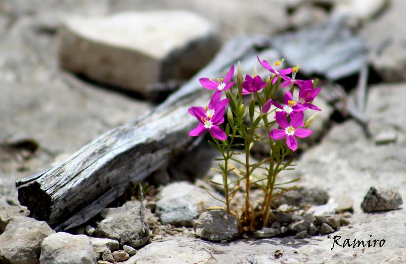 Edited flowers in rock.jpg