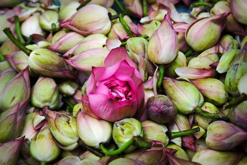 lotusesNew.jpg