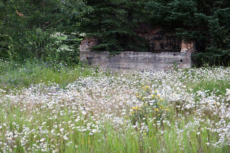 Flowers & Ruins