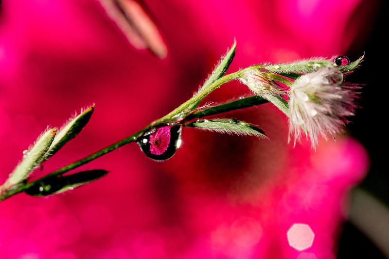 flower reflection 1.jpg