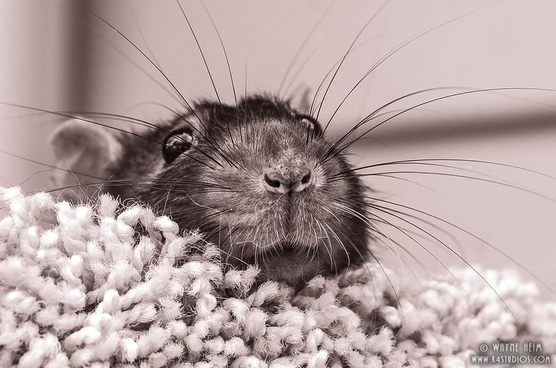 Peek a Boo - Black & White Photography by Wayne Heim