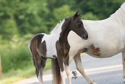 Melody & Colt